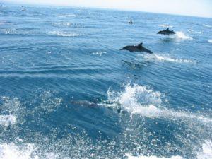 dolphinCatalina